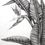 Bird of Paradise - Cross Hatching Exercise