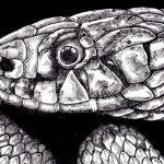 Enya - Hatching Snake