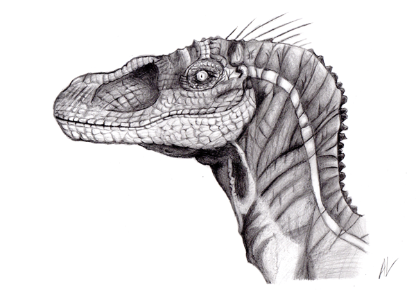 Anthony Li. - Graphite Velociraptor