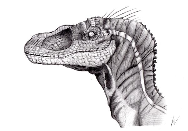 Anthony Li Graphite Velociraptor Oam Studios Art Academy