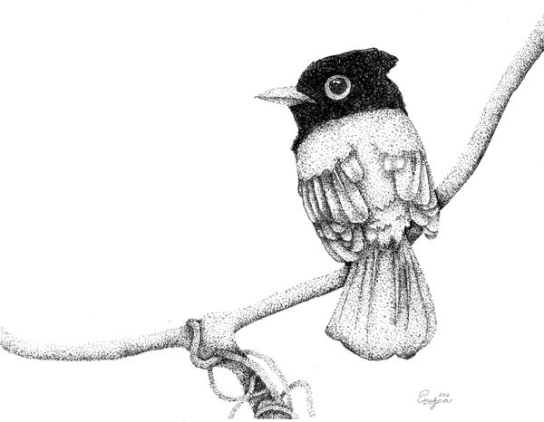 Enya Deng - Stippled Drawing, created in Pleasanton Ca. at Oam Studios.